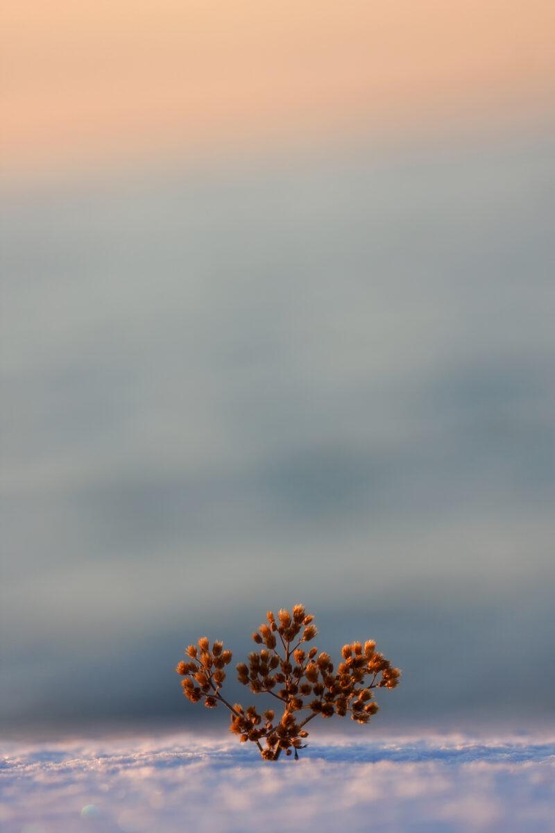 Suur puu .. omaarust