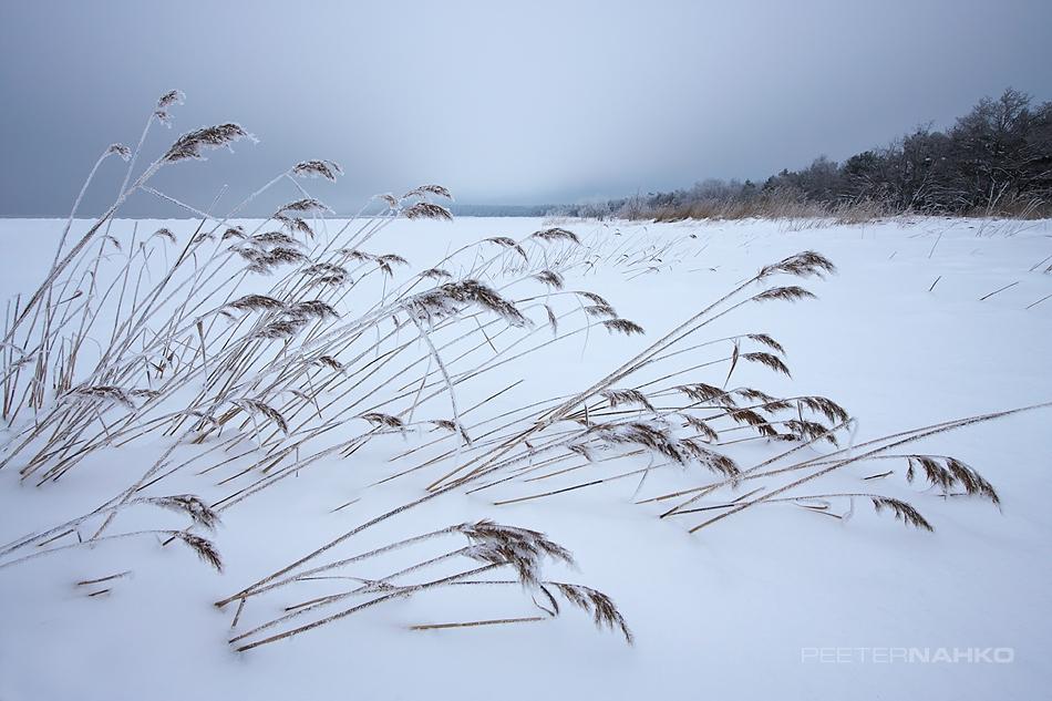 Rannatäis lund