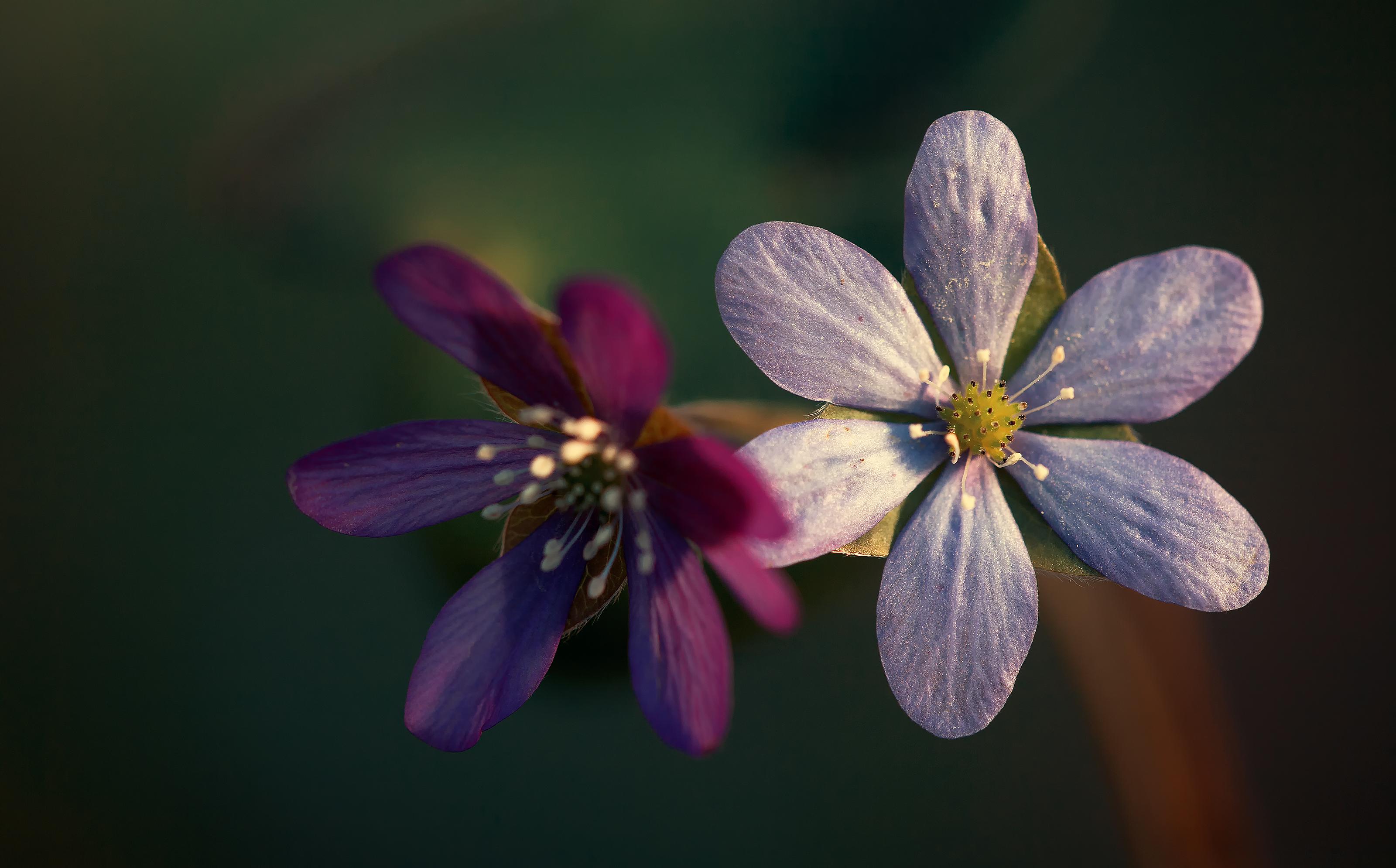 Siniste lillede aeg