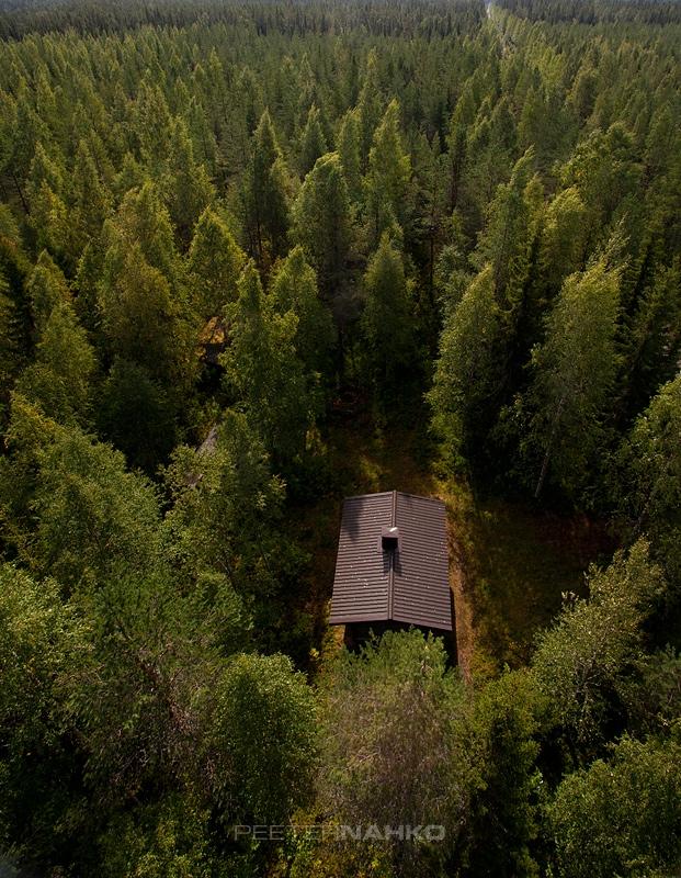 Elu keset metsa